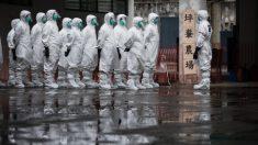 中 쓰촨성 축산농가서 조류독감 발생…닭·오리 1800마리 폐사