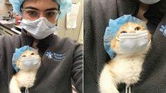 마스크 쓴 주인 따라서 코로나에 단단히 대비한 '세젤귀' 아기 고양이