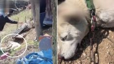 강아지 매달아 몽둥이로 후려치는 70대 노인들 보고 온몸 던져 구조한 시민