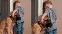 엄마에게 벌 받고 있는 꼬마 주인을 본 강아지의 의리 넘치는 행동