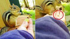 사람이 청포도 줬더니 먹고 있던 땅콩이랑 바꾸는 '똑똑이' 다람쥐 (영상)