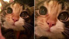 """""""신기하고 아름답다냥"""" 태어나서 크리스마스 트리를 처음 본 고양이의 '눈빛'"""