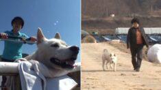 """""""이제 다시는 못 걷는다"""" 교통사고로 전신마비된 강아지가 기적처럼 다시 걷기 시작했다"""