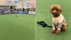 기다려 대회에서 1등한 강아지