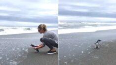 사육사 품 떠나 바다로 돌아가는 날, 꼬마 펭귄은 차마 발걸음을 떼지 못했다 (영상)