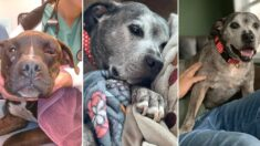 학대당하고 버려진 뒤, 10년 동안 보호소에 갇혔다가, 마침내 입양된 강아지의 미소