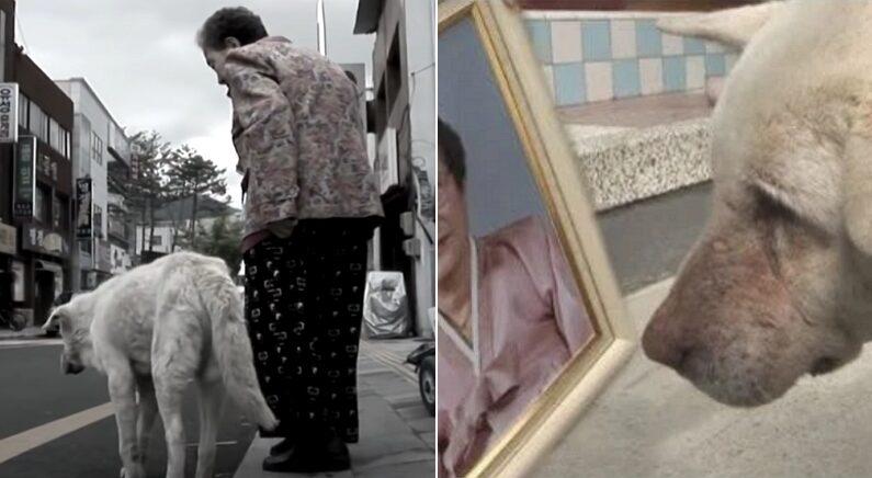 할머니 장례식에서 눈물 주룩주룩 흘리던 백구가 2년 동안 한 일 (영상)