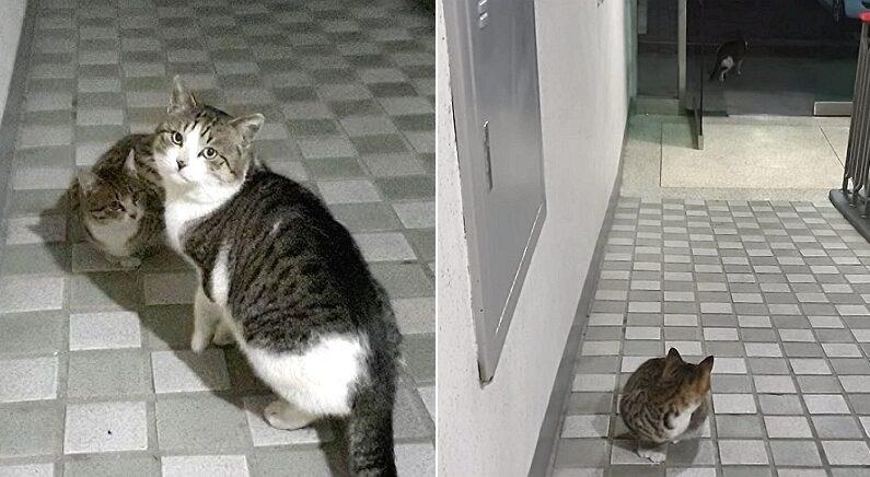사람 사는 집 앞까지 아기 데리고 온 아빠 길고양이, 아기를 남겨둔 채 뒤돌아섰다 (영상)