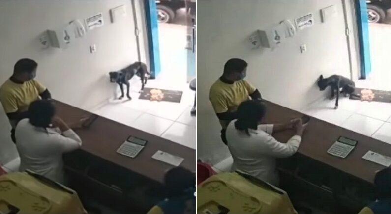 """""""저 좀 도와주세요"""" 절뚝절뚝 스스로 동물병원 찾아온 유기견 (병원 CCTV 영상)"""