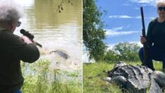 자기 반려동물 잡아먹은 4m 초대형 악어 총알 단 한 발로 쏴 죽인 할머니