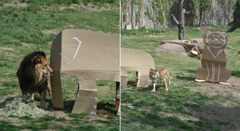 호랑이와 사자 장난감으로 재활용된 LG전자 '냉장고 박스' 근황