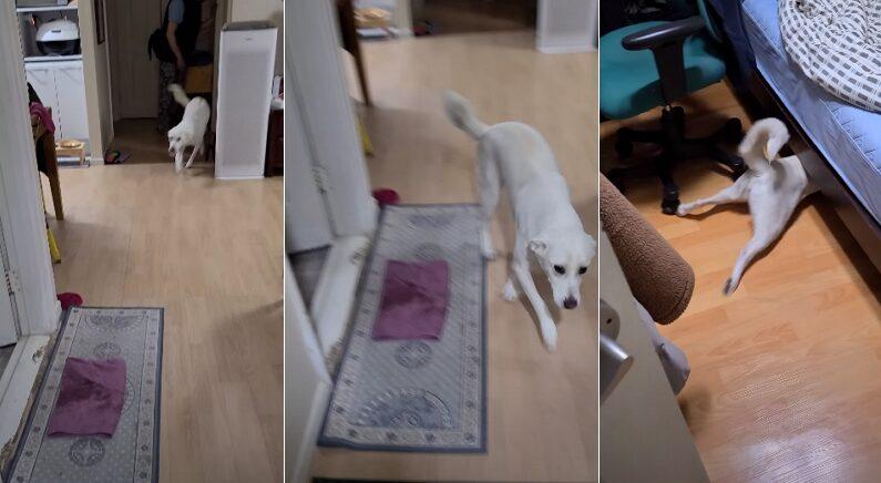 귀가한 주인 반갑다고 달려오는 강아지에게 '목욕하자'라고 말했더니 (영상)