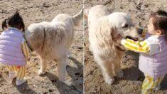 아장아장 아기 넘어질까 봐 재빨리 뒤따라 '에스코트' 해주는 강아지 (영상)