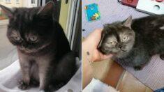심술궂게 생긴 얼굴 때문에 오랫동안 입양되지 못했던 고양이의 최후