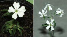 3만2천년 전에 살던 다람쥐가 굴 속에 감춰놓은 열매가 새하얀 꽃을 피웠다