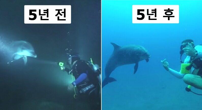 스쿠버다이빙 체험 중이던 남성에게 돌고래가 혼자 다가온 이유 (영상)