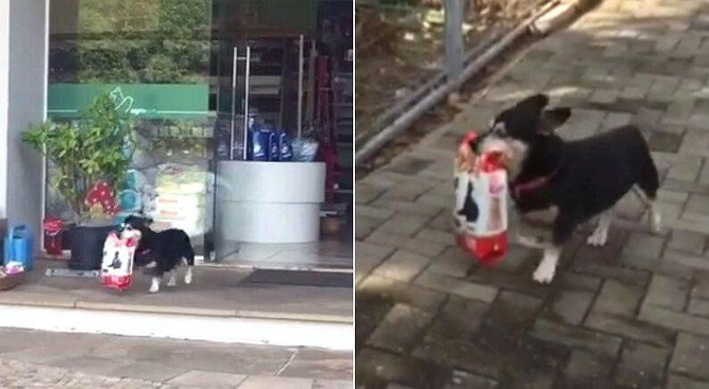 혼자 사료 쇼핑하고 집 돌아가는 '똑똑이' 강아지가 발견됐다 (영상)