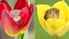 한국에서 꽃가루 먹고 사는 7그램짜리 쥐의 정체