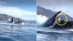 """""""눈 떠보니 혹등고래 입 속"""" 카약 타다 사라진 여성들이 포착됐다"""