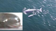 우리나라 바다에서만 1년에 1000마리씩 사라지는 '웃는 돌고래'의 정체