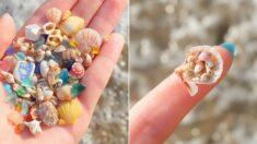 모래 대신 조개껍데기 깔려 있어 코로나 끝나면 꼭 가봐야 할 '조개 바닷가'