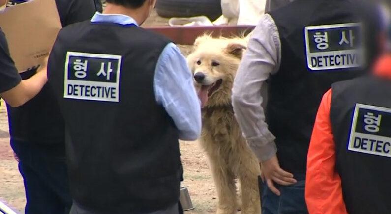 """""""내 개 아니다"""" 발뺌하던 '남양주 살인견' 주인을 특정한 결정적 단서"""