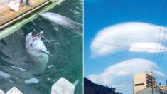 '마지막 돌고래' 화순이가 세상 떠났다는 소식 전해진 날, 누리꾼들 사이에 퍼진 '돌고래 구름'