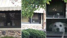 11년 동안 매일 한결같이 창가에 앉아 주인 기다리다 세상 떠난 강아지의 모습