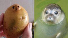 """""""안녕하세요 저는 물범인데요, 감자에 영혼이 갇혔어요"""""""