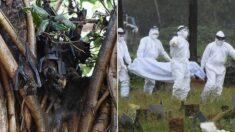 인도에 박쥐가 옮긴 또 다른 전염병, 치사율 75% '니파 바이러스'가 퍼지고 있다