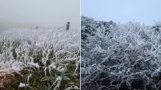 64년만에 찾아온 이른 한파에 월동 준비도 못 한 채 초록잎 그대로 얼어붙은 한라산